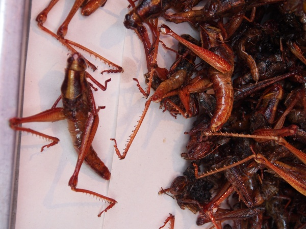 Umm, grasshoppers.  Delicious and popular in sweet soya sauce