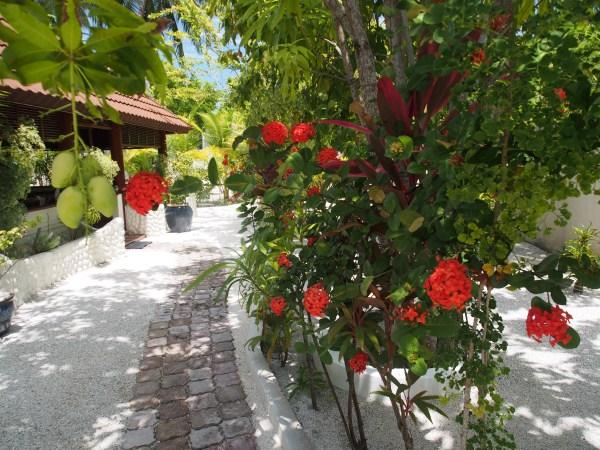 Garden and gazebo