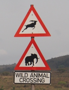 Are we actually going to see some wildlife