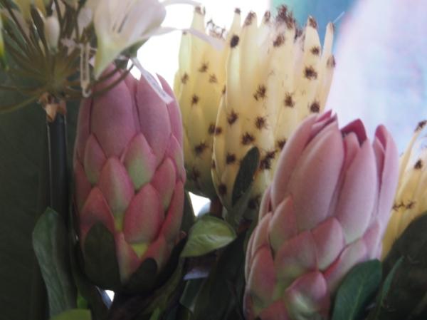 Prolific Proteas