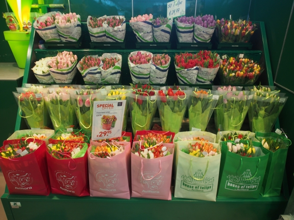 Tis the tulip season
